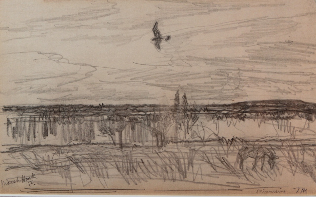 Thoreau MacDonald Marsh Hawk Unframed Final